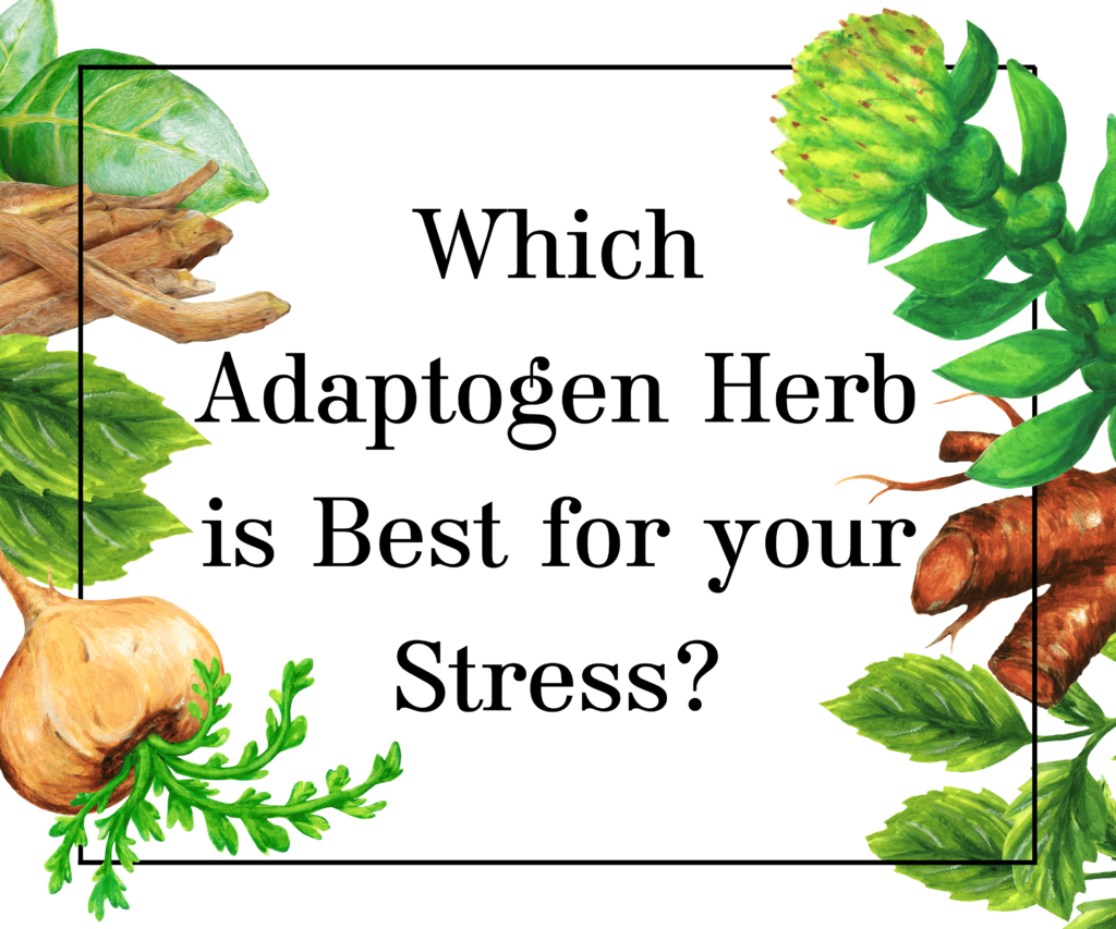 Adaptogen Herb Quiz